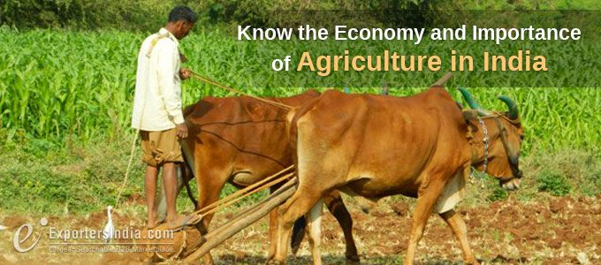 Know the Economy and Importance of Agriculture in India