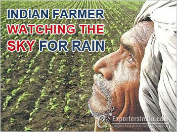 Indian former watch the sky for rain