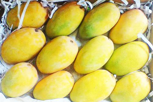 Pure Natural Kesar Mango