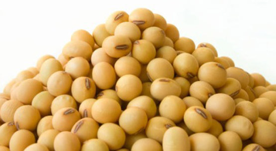 Indian Soybean Seeds