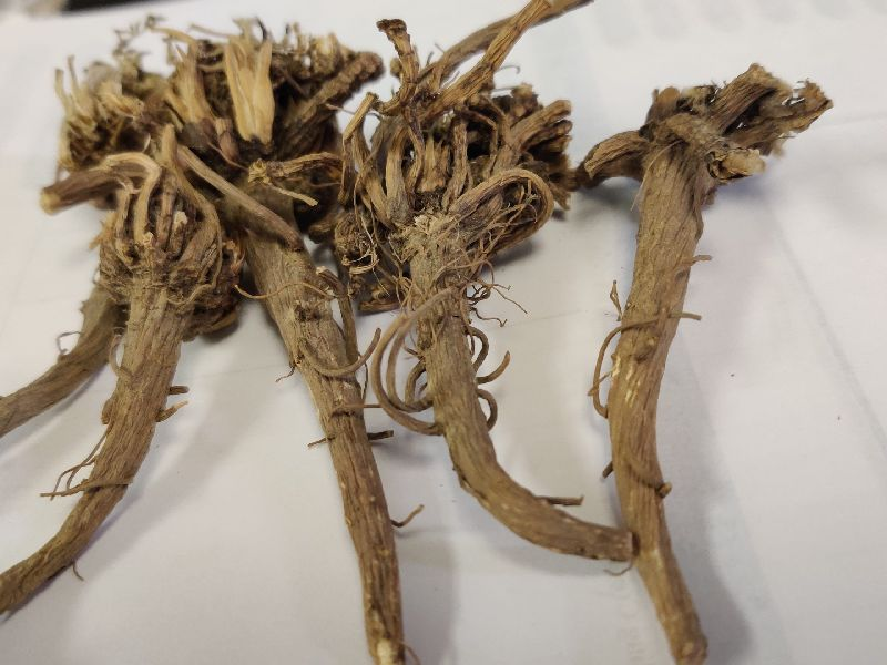 Pyrethrum Roots