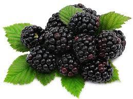 Fresh Blackberry