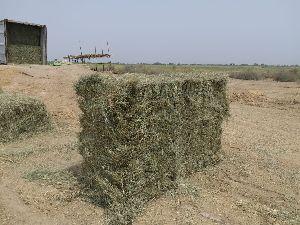 Rhodes Grass 02
