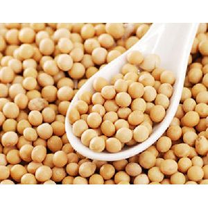 GMO Soybean Seeds