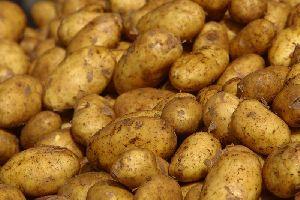 Small Potato