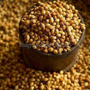 Coriander Kalmi Seeds