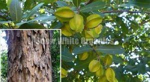 Natural Organic Arjun Tree Chaal