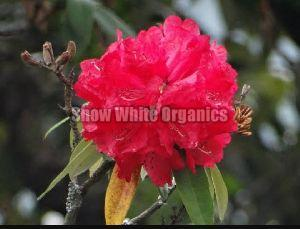 Natural Organic Barah Flower