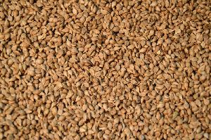 Brown Millet Seeds
