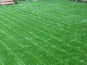 Artificial Bermuda Grass