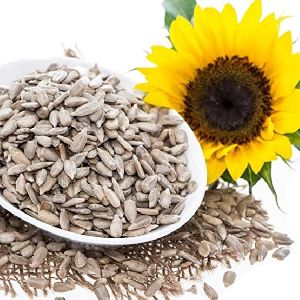 White Sunflower Seed